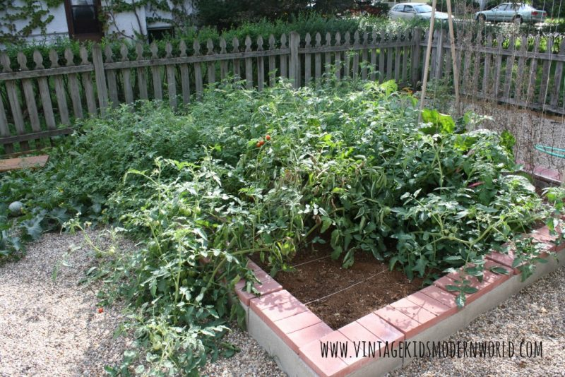 cinder block raised beds 2