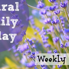 Natural Family Friday - 8/15/14 :: Vintage Kids | Modern World
